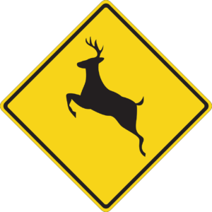 How to lower your risk for a deer collision in Lafayette, LA